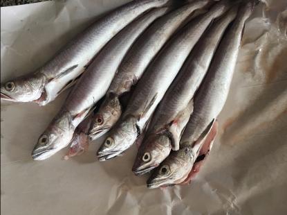 Rezept; Stockfisch mit rauer Gänsedistel.